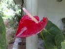 Home Photos - Idukki Thankamany Kamakshy